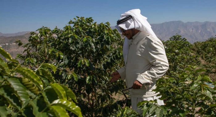Saudi entrepreneurs trying to preserve traditional coffee production